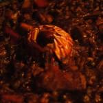 Paella Parellada 7 Portes