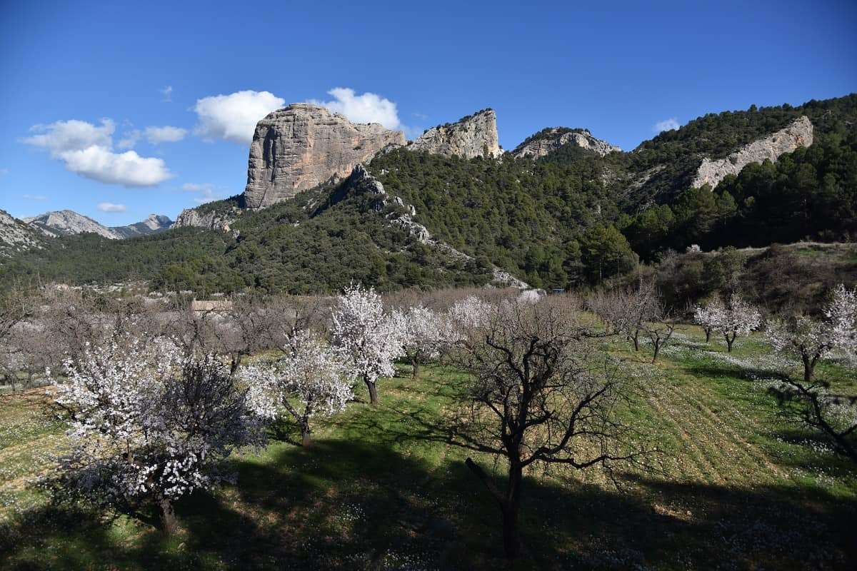 Almond trees outside Horta de Sant Juan