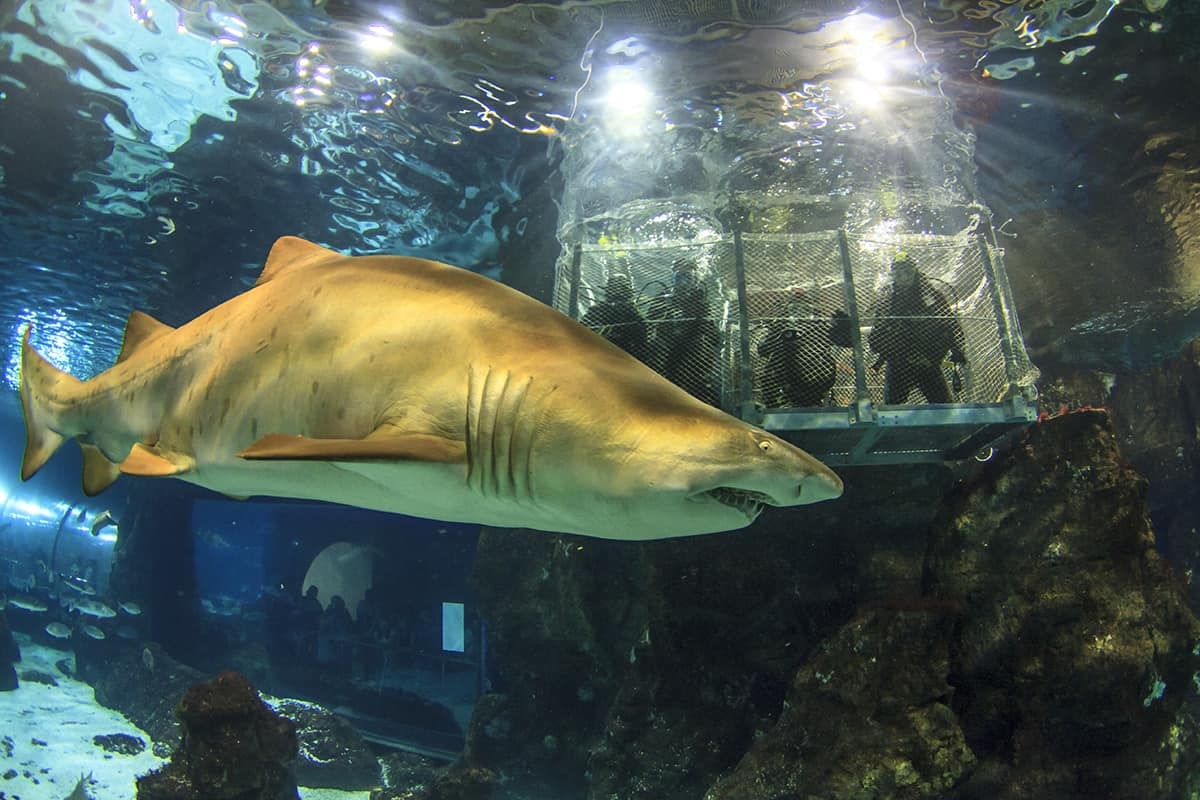 Shark Cage Diving at Barcelona Aquarium