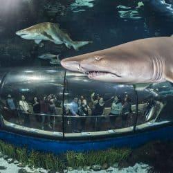 Barcelona Aquarium Sharks