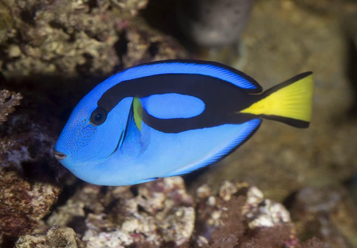 Barcelona Aquarium Clownfish